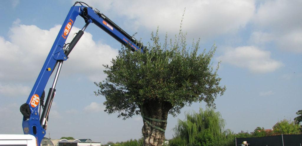 Перевозка деревьев в Москве